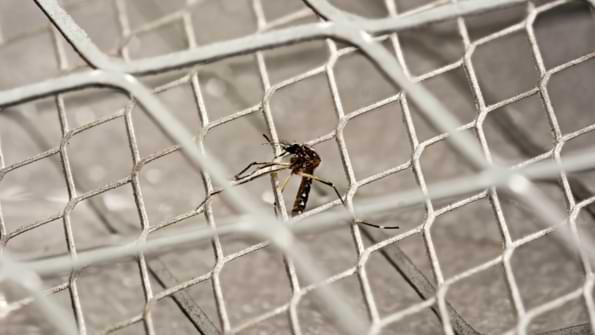 raquette anti moustique