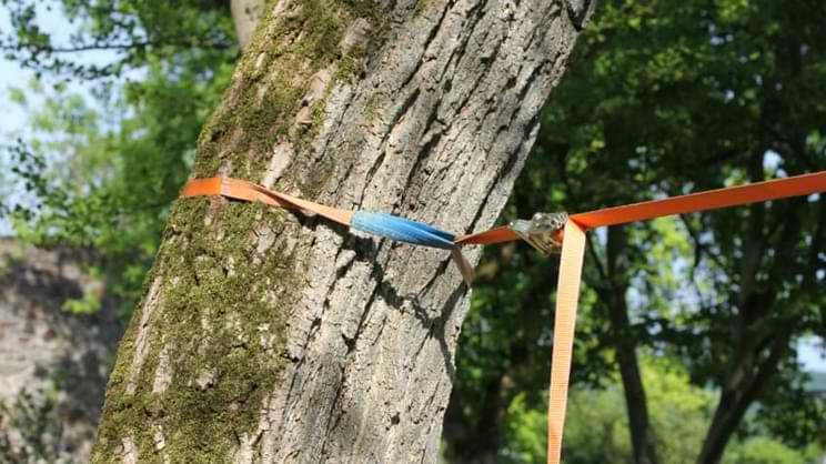 installer sangle slackline arbre cliquet