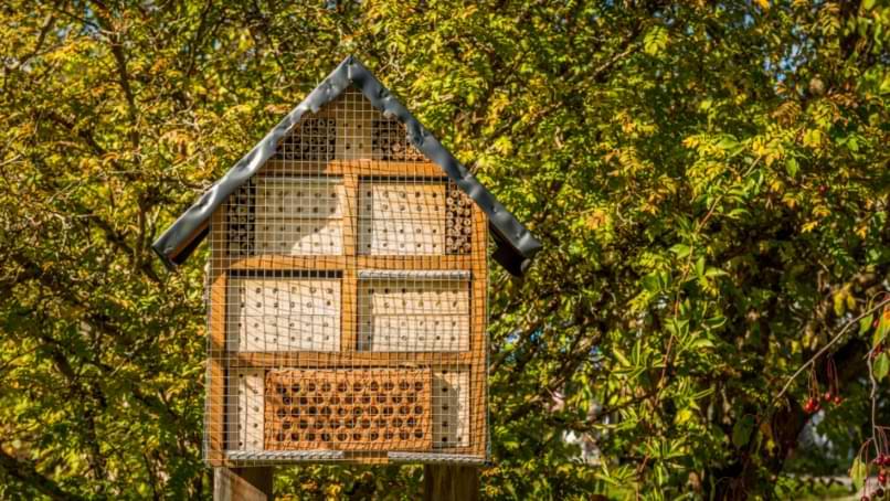 lieu pour installer maison a insecte