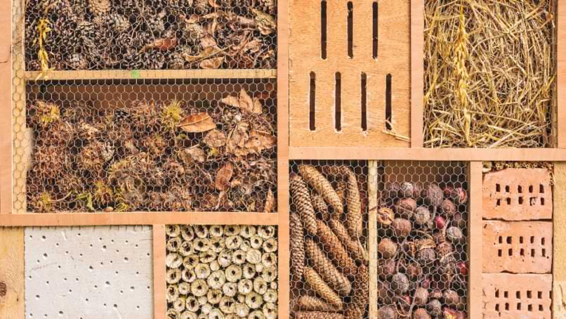 maison à insectes bois
